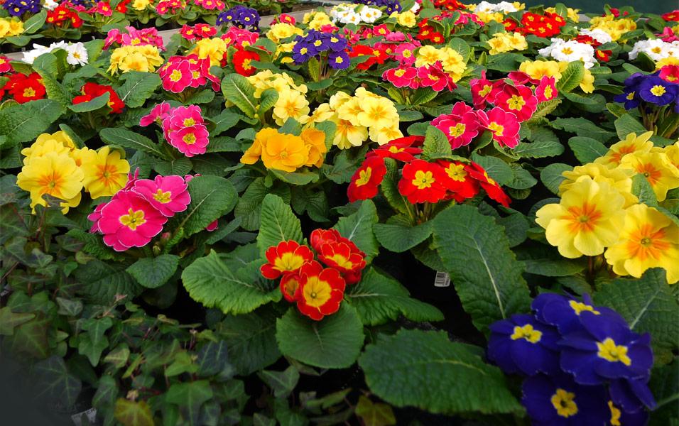 pompei sequestro di fiori e piante radio marte