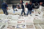 Napoli: Sequestro Di Pesce In Diverse Zone Della Città